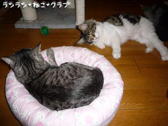 20081002guremaro4.jpg