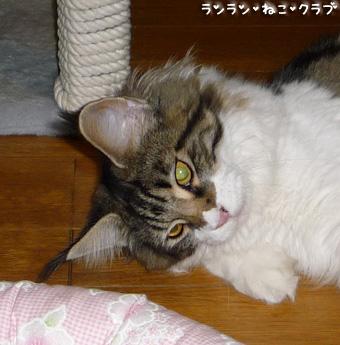 20081002guremaro4_2.jpg