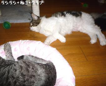 20081002guremaro5.jpg