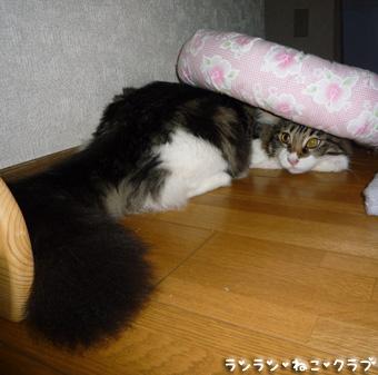 20081004maron5.jpg