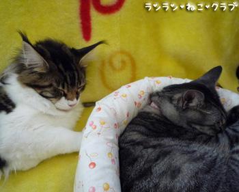 20081008guremaro2.jpg