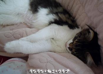 20081010maron4.jpg