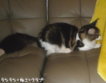 20081014guremaro1.jpg