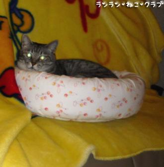 20081014guremaro2.jpg