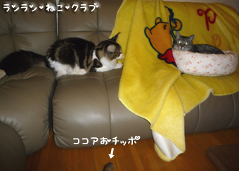 20081014guremaro3.jpg