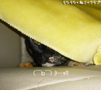20081015gurecoco3.jpg