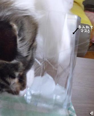 20081017maron1_2.jpg