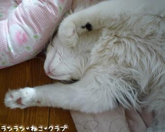 20081018maron2.jpg