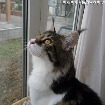 20081024cocomaro6.jpg