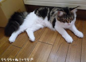 20081101cocomaro2.jpg