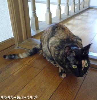 20081101cocomaro3.jpg