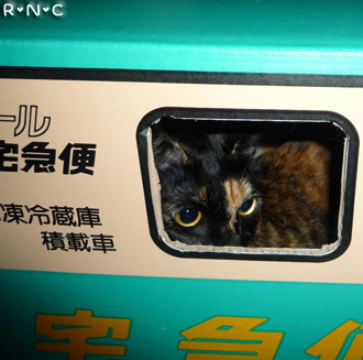 20081110cocomaro3.jpg