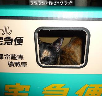 20081110cocomaro5.jpg