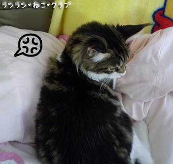 20081112maron2.jpg