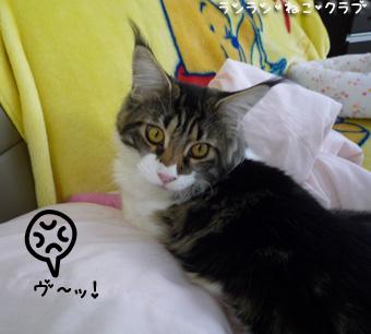20081112maron3.jpg