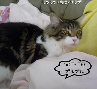 20081112maron4.jpg