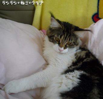 20081112maron6.jpg