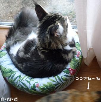 20081115cocomaro1.jpg