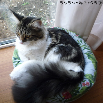 20081115cocomaro3.jpg