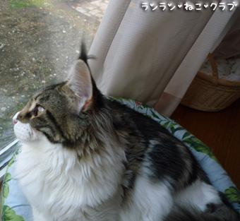 20081115cocomaro4.jpg