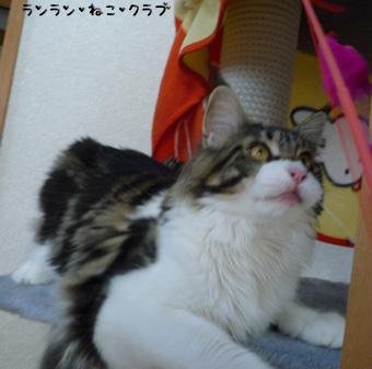 20081116maron1.jpg