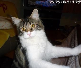 20081118maron1.jpg