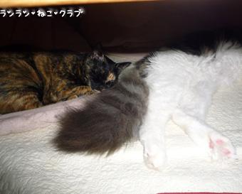 20081123cocomaro1.jpg