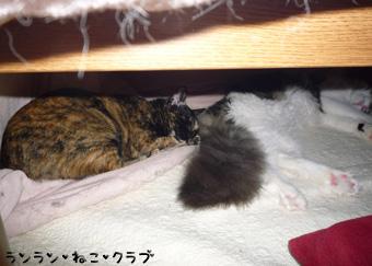 20081123cocomaro2.jpg