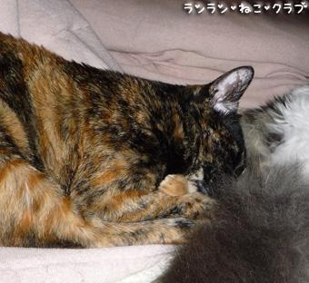20081123cocomaro4.jpg