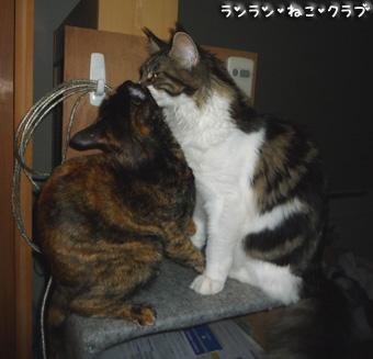20081202cocomaro1.jpg
