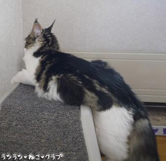 20081203maron1.jpg