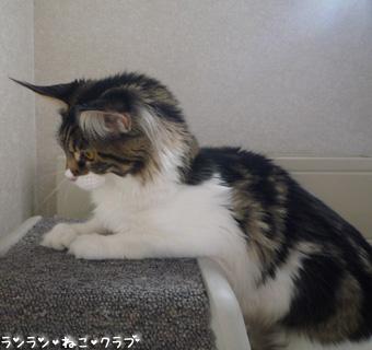 20081203maron2.jpg