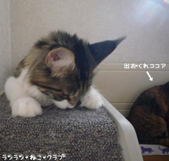 20081203maron4.jpg