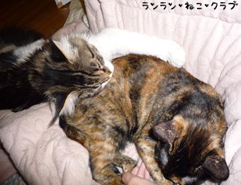 20081204cocomaro1.jpg