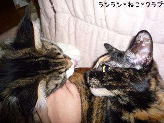 20081204cocomaro2.jpg