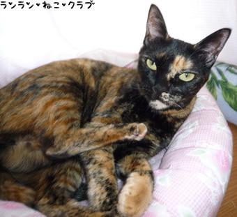 20081207cocoa2.jpg