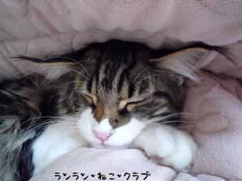 20081208maron3.jpg