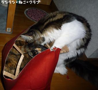 20081210cocomaro1.jpg