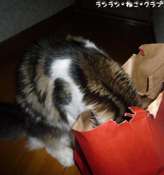 20081210cocomaro2.jpg
