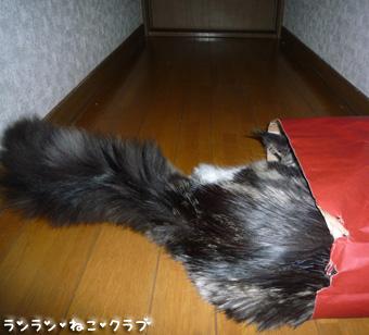 20081210cocomaro3.jpg