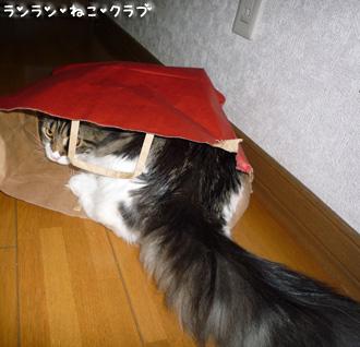 20081210cocomaro4.jpg