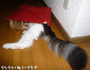 20081210cocomaro6.jpg