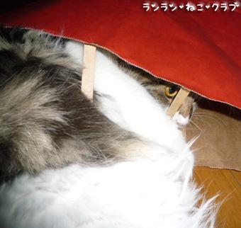 20081210cocomaro7.jpg