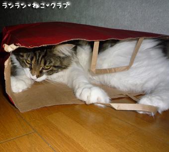 20081210cocomaro8.jpg