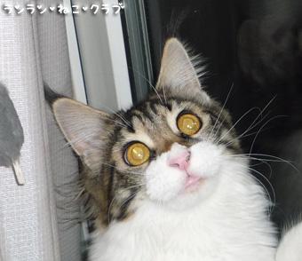 20081215cocomaro5_1.jpg