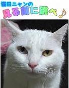 猫田 ニャン =^_^=