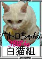 白猫組38番