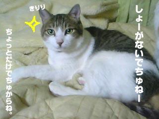 008_3.jpg