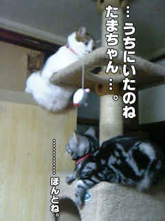 117_4.jpg