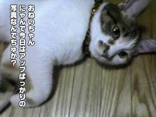 135_4.jpg